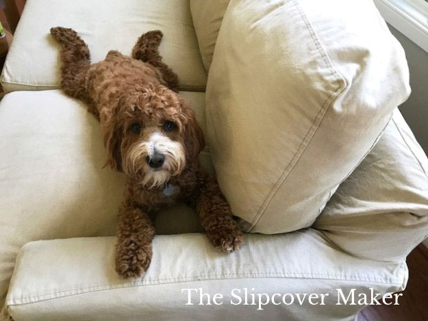 Pet Friendly Slipcover Fabrics for Slipcovers